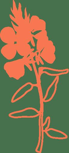 Giant evening primrose oil